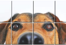 Adorable Puppy Watching You   mosaic wall art 8 pieces 8×8″ PhotoSquared photo tiles