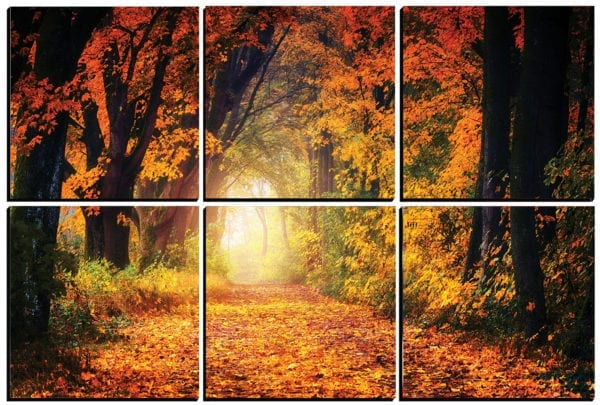 Beautiful Fall Foliage in the Forest printed on 6 PhotoSquares